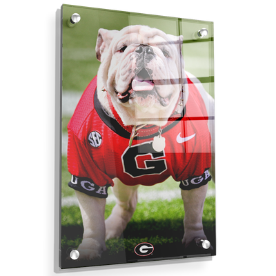 Georgia Bulldogs - Uga Poised II - College Wall Art #Acrylic