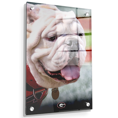 Georgia Bulldogs - Uga Portrait - College Wall Art #Acrylic