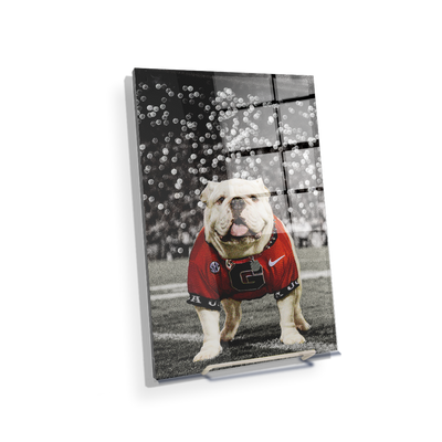 Georgia Bulldogs - Uga Under the Lights - College Wall Art #Acrylic Mini