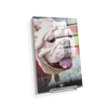 Georgia Bulldogs - Uga Portrait - College Wall Art #Acrylic Mini