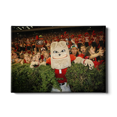 Georgia Bulldogs - Hairy in the Hedges - College Wall Art #Canvas