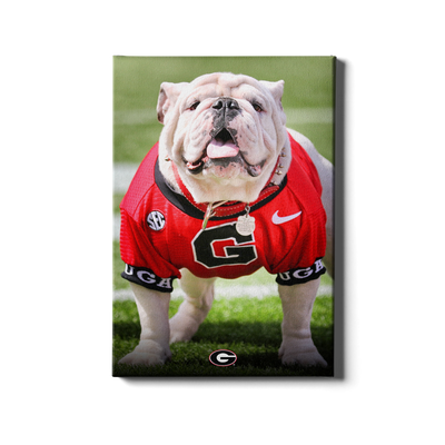 Georgia Bulldogs - Uga Poised II - College Wall Art #Canvas