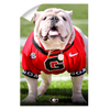 Georgia Bulldogs - Uga Poised II - College Wall Art #Wall Decal