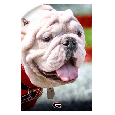 Georgia Bulldogs - Uga Portrait - College Wall Art #Wall Decal