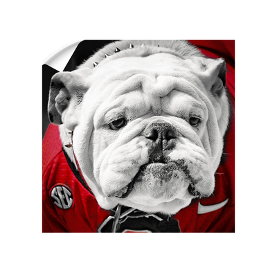 Georgia Bulldogs - Uga Close Up