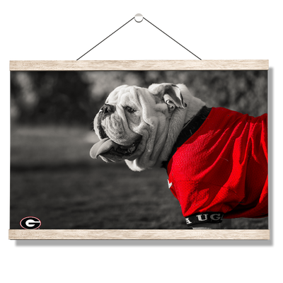 Georgia Bulldogs - Uga Poised - College Wall Art #Hanging Canvas