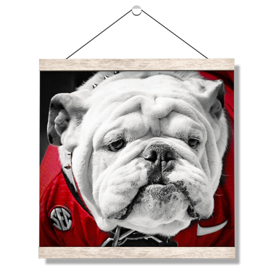 Georgia Bulldogs - Uga Close Up - College Wall Art #Hanging Canvas
