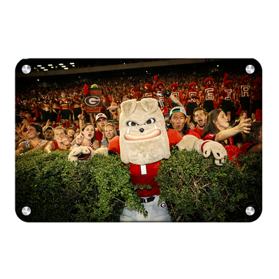Georgia Bulldogs - Hairy in the Hedges - College Wall Art #Metal