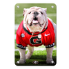 Georgia Bulldogs - Uga Poised II - College Wall Art #Metal