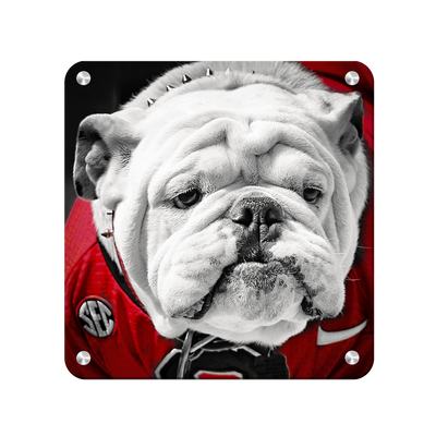 Georgia Bulldogs - Uga Close Up - College Wall Art #Max Metal
