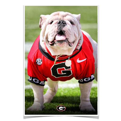 Georgia Bulldogs - Uga Poised II - College Wall Art #Poster