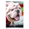 Georgia Bulldogs - Uga Portrait - College Wall Art #Poster