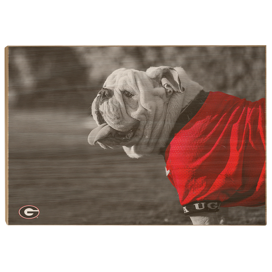 Georgia Bulldogs - Uga Poised - College Wall Art #Canvas