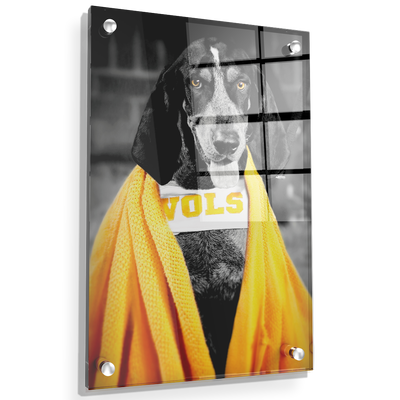 Tennessee Volunteers - Jedi Smokey - College Wall Art #Acrylic