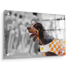 Tennessee Volunteers - Smokey X - College Wall Art #Acrylic