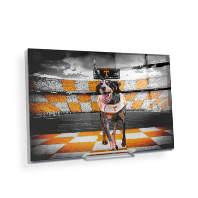 Tennessee Volunteers - Smokey's Backyard - College Wall Art #Acrylic Mini