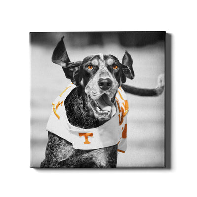 Tennessee Volunteers - Smokey TD - College Wall Art #Canvas