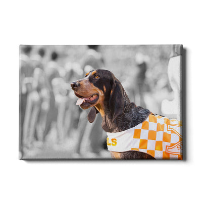 Tennessee Volunteers - Smokey X - College Wall Art #Canvas