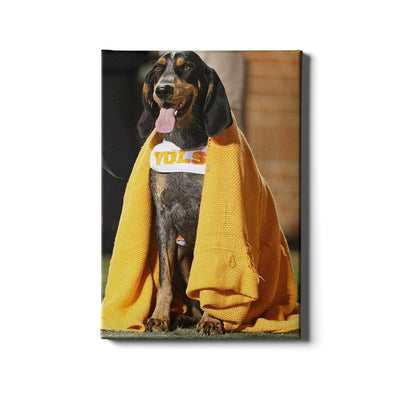 Tennessee Volunteers - Smokey's Blanket - College Wall Art #Canvas