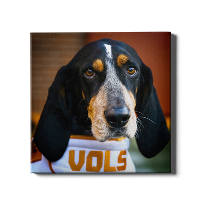 Tennessee Volunteers - TN Smokey Vols - College Wall Art #Canvas