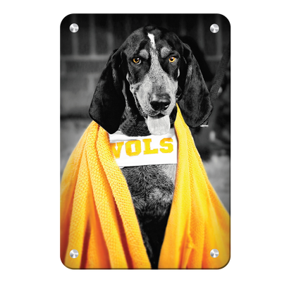 Tennessee Volunteers - Jedi Smokey - College Wall Art #Metal