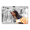 Tennessee Volunteers - Smokey X - College Wall Art #Metal