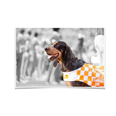 Tennessee Volunteers - Smokey X - College Wall Art #Poster