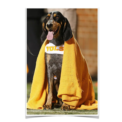 Tennessee Volunteers - Smokey's Blanket - College Wall Art #Poster