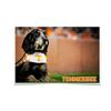Tennessee Volunteers - Smokey - College Wall Art #Poster