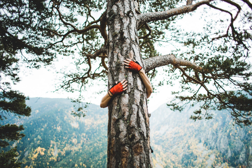 Tree lover hugging a pine with the mountains view in the background
