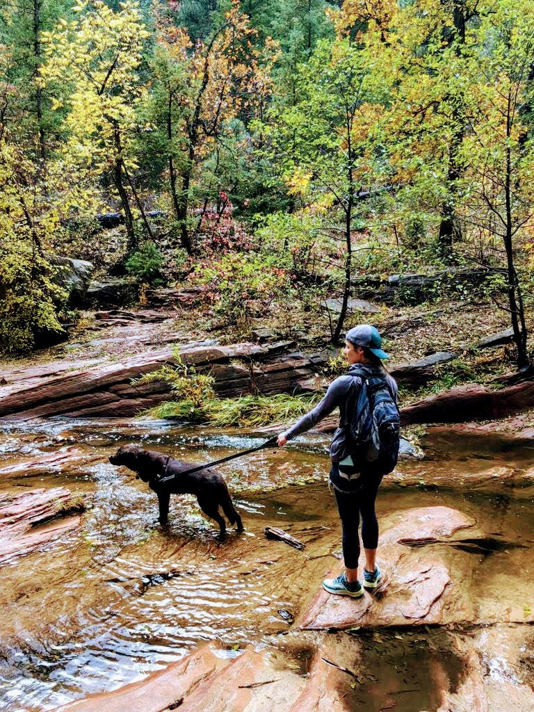 Walking the chocolate lab in Fall in Sedona Arizona
