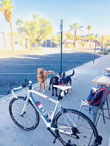 road bicycle parked by a Regroup Coffee Roasters in Old Town Scottsdale with the three pups waiting next to it