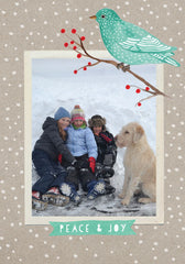 """Winter Bird"" Holiday Postcard"