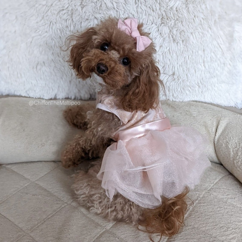 Rose Iridescent Ribbon Waist Lace Tutu Dress (NEW) - DogCrush Boutique