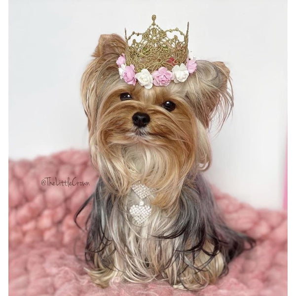 Gorgeous Golden Princess Crown for Your Dog - DogCrush Boutique