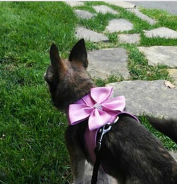 Monroe Pink Iced Pet Harness Limited Edition - DogCrush Boutique