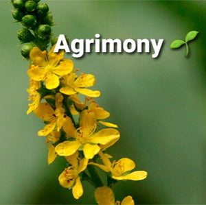 Agrimony,  Dried, C/S,  4oz