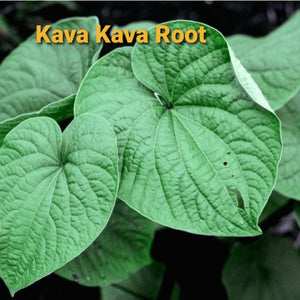 Kava Kava Root,  Dried, C/S,  4oz