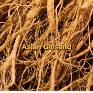 Asian Ginseng Root, Dried, Powder,  4oz