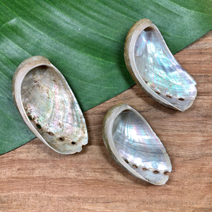 Abalone - 3 Pieces