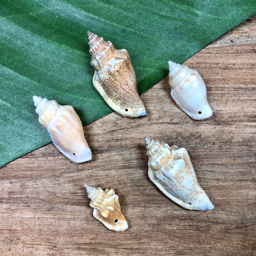 Variable Conch Shell - 3 Pieces