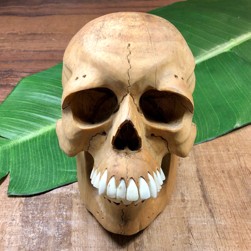 Large Hibiscus wood skull