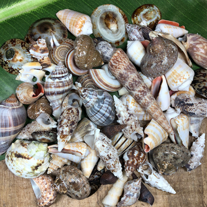 Shell - Assorted Pieces