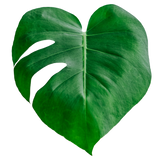 Monstera Heart Pin