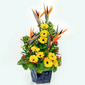 9 Yellow gerberas and 5 birds of paradise nestled with green foliage vase arrangement by Katong flower shop for Singapore Delivery