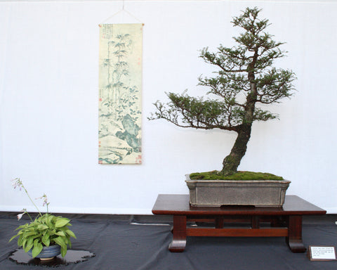 Slanting Bonsai Tree