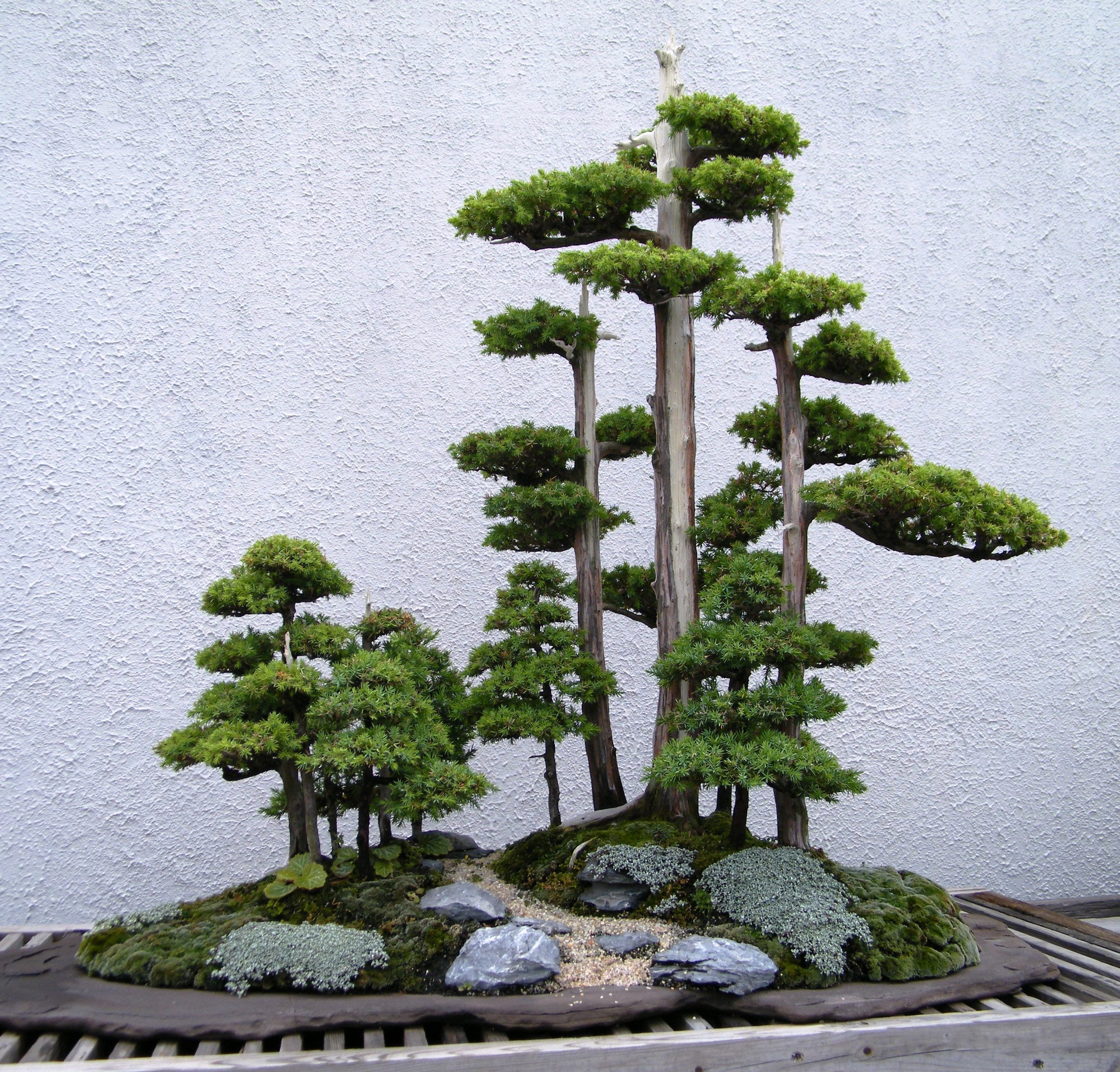 The Most Beautiful Bonsai Forest Plantings Love My Bonsai
