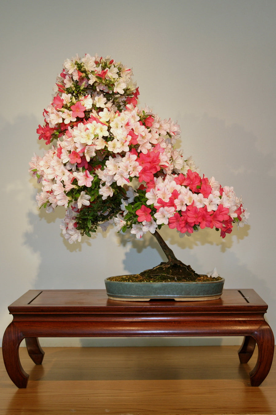 Flowering Bonsai Trees