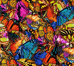 Bright Butterfly Digital Print Swatch.