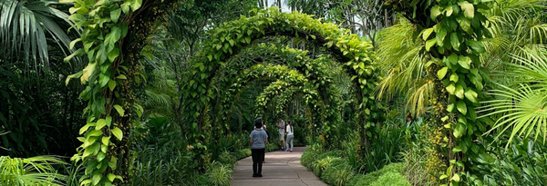 Singapore Love Story: A Walk in the Botanic Gardens